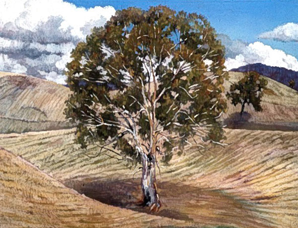 Peter Caddy Australian Artist